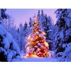 free-christmas-clipart-and-christmas-tree-photos.jpg