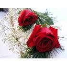 bloemen0001.jpg