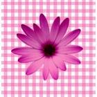 geboorte_flowers010.jpg