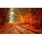 herfst-achtergrond-met-spoorrails-en-rood-oranje-bladeren.jpg