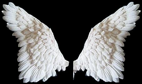 White Angel Wings Png
